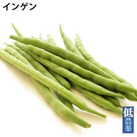 インゲン 低農薬栽培 500g