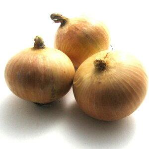 有機玉ねぎ 1kg 北海道産 無農薬栽培