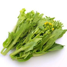 越冬はくさい菜 新潟県産 低農薬栽培 5把