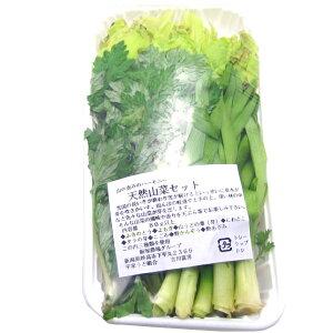 【春の味覚】天然山菜セット 3種類 5パック