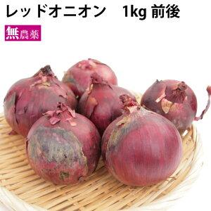 レッドオニオン 北海道産 1kg