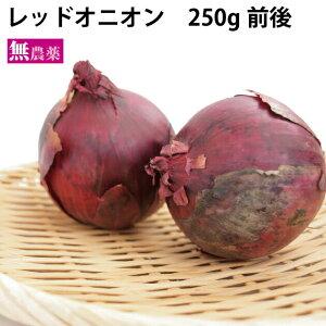 レッドオニオン 無農薬栽培 250g(1〜2個)