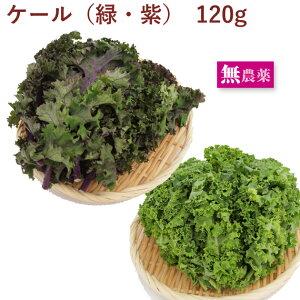 カーリーケール(緑または紫) 無農薬栽培 120g 6袋