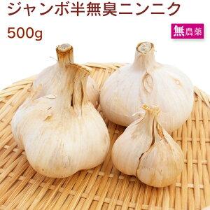 ジャンボ半無臭にんにく 茨城県産 無農薬栽培 500g