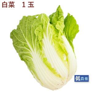 白菜 低農薬栽培 1玉