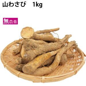山わさび 無農薬栽培 1kg