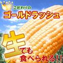 過去の最高糖度24度!幻の極甘トウモロコシ!本当はちょっと高価なステビア農産物のゴールドラッュのとうもろこし1.5kg