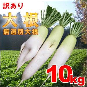 無選別【A品と訳あり】ステビア・米ぬか農法の瑞々しい無選別青首大根10kg