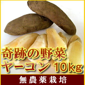 【送料無料11末前後より収穫発送】栽培時農薬不使用訳ありヤーコン大小様々10kgシャキシャキと生で健康サラダにピッタリ
