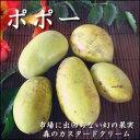 【9月中頃より順次発送開始】木になるカスタードクリーム幻の果物の『ポポー』『ポーポー』500g+50g前後