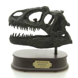 頭骨フィギュア アロサウルス スカル&ジョーズモデル 恐竜グッズ 通販 取寄品 バースデー 誕生日ギフト 入園祝い 入学 祝い ベルコモン のし利用可
