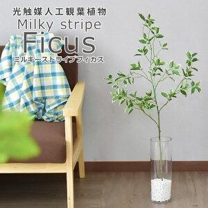 人工観葉植物 光触媒 フィカスストライプ(ガラス鉢) 水やり不要 インテリアグリーン 観葉植物 造花フィカスストライプ(ガラス鉢) 送料無料