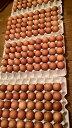 孵化しかけの鶏卵 10個 Hot Ga Lon 10qua 【アジアン、エスニック、ベトナム食材、ベトナム食品、ベトナム料理、チリ…