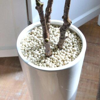 観葉植物,フェイク,エコストーン,マグノリアリーフ