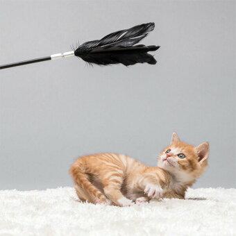 グース,フェザー,雁,ガチョウ,鳥,野生,交換式,取り換えられる,ギフト,贈り物,猫ちゃん,愛猫用,