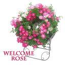 母の日 早割 送料無料 花 ギフト プレゼント ウェルカム ローズ スタンド 付き 薔薇 バラ レンゲ ローズ 寄せ植え ミニバラ フラワー …