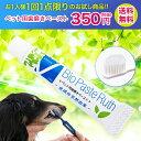 歯磨きペースト バイオペースト ルース [5g] Bio Paste Ruth ペーストタイプ | visionsオリジナル | dog visions