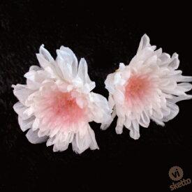 大地農園 プリザーブドフラワー ことね菊 ≪ホワイトピンク≫ (プリザ 花材 1箱6輪入り )