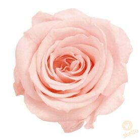 大地農園 プリザーブドフラワー ローズ いずみ ≪ブライダルピンク≫ (プリザ 花材 薔薇 バラ レッド 1箱9輪入り )