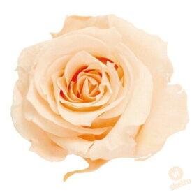 大地農園 プリザーブドフラワー ローズ いずみ ≪クリーミーピーチ≫ (プリザ 花材 ローズ 薔薇 バラ レッド 1箱9輪入り )