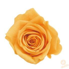 大地農園 プリザーブドフラワー ローズ いずみ ≪フルーティオレンジ≫ (プリザ 花材 薔薇 バラ orange 1箱9輪入り )