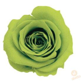 大地農園 プリザーブドフラワー ローズ いずみ ≪ライトグリーン≫ (プリザ 花材 薔薇 バラ green 1箱9輪入り )