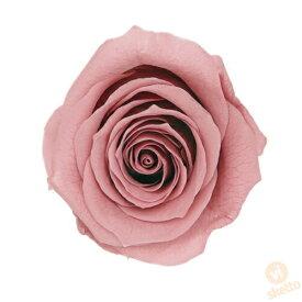 大地農園 プリザーブドフラワー ローズ いずみ ≪モーブピンク≫ (プリザ 花材 薔薇 バラ ピンク pink 1箱9輪入り )
