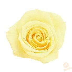 大地農園 プリザーブドフラワー ローズ いずみ ≪モーニングイエロー≫ (プリザ 花材 薔薇 バラ yellow 1箱9輪入り )
