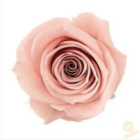 大地農園 プリザーブドフラワー ローズ いずみ ≪マルーンピンク≫ (プリザ 花材 薔薇 バラ ピンク pink 1箱9輪入り )
