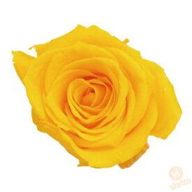 大地農園 プリザーブドフラワー ローズ いずみ ≪ミモザイエロー≫ (プリザ 花材 薔薇 バラ yellow 1箱9輪入り )