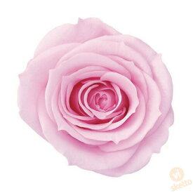 大地農園 プリザーブドフラワー ローズ いずみ ≪シャーベットピンク≫ (プリザ 花材 薔薇 バラ pink 1箱9輪入り )