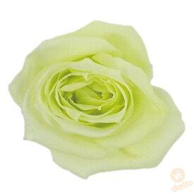 大地農園 プリザーブドフラワー ビビアン ≪フレッシュグリーン≫ (プリザ 花材 1箱24輪入り )
