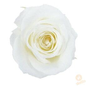 大地農園 プリザーブドフラワー ビビアン ≪ピュアホワイト≫ (プリザ 花材 1箱24輪入り )