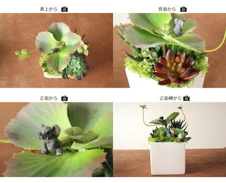 【送料無料】多肉植物ビッグゾウ&キリンのピック付陶器アーティフィシャルフラワー(造花)花屋