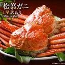送料無料 訳あり 鳥取県 境港産 ボイル 松葉カニ 蟹 1尾(350g〜450g)【松葉ガニ350W1尾】