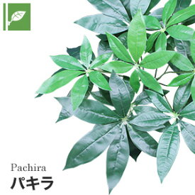 【壁面緑化】マグネット式壁面装飾 ぴたっとグリーン 人工植栽 パキラ__pg-011