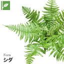 【壁面緑化】マグネット式壁面装飾 ぴたっとグリーン 人工植栽 シダ__pg-012