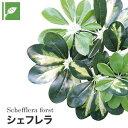 【壁面緑化】マグネット式壁面装飾 ぴたっとグリーン 人工植栽 シェフレラ__pg-013