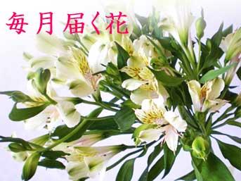 毎月届く花・4月はアルストロメリアの花束■花便り12か月コース■1年間毎月花を贈る・毎月記念日に花束・和風ラッピング【生花・送料無料】