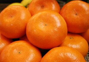 果汁たっぷり!佐賀 『完熟 麗紅(れいこう)』 12個入※2月下旬よりのお届けとなります。