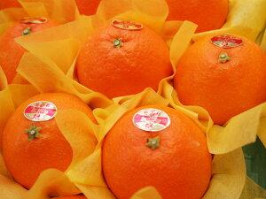 【お歳暮】【ギフト】愛媛産紅まどんな15個入(化粧箱)※12月上旬よりのお届けとなります。