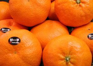 ぷちぷちの食感に甘さ・果汁もたっぷり! 愛媛産『甘平(かんぺい)』12個(化粧箱)※2月上旬よりのお届けとなります。
