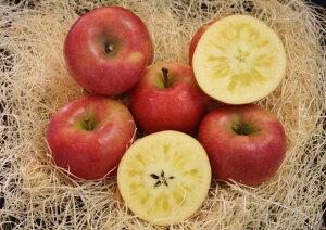 【お歳暮】【ギフト】青森りんご 蜜たっぷり!! 特選こみつ8個(化粧箱)※11月下旬よりのお届けとなります。
