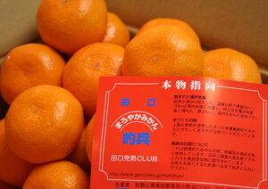 和歌山有田 的場清 作 『的兵みかん』 赤秀S 5kg(約50〜55個入)※12月上旬よりのお届けとなります。