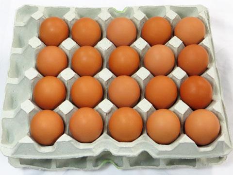 【送料無料】島根県 生卵 しまづの「こだわり」卵(赤卵40個入り) 贈答用 / 濃厚 高級たまご 新鮮たまご 卵かけご飯 純国産鶏 もみじ お取り寄せ 通販 お土産 お祝い /