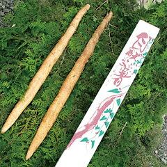 【送料無料】茨城県自然薯(約1kg)極上とろろ/やまのいも/健康食/じねんじょ