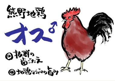 三重ブランド認定品熊野地鶏一羽セット(オス)