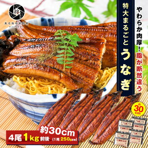 特大うなぎ 蒲焼き 4尾 (タレ 山椒 付) 大容量 送料無料 お取り寄せグルメ ギフト 贈り物 通販 冷凍食品