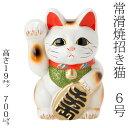 常滑焼 招き猫 6号小判白猫貯金箱 右手上げ (143-58-86) 愛知県の工芸品 Tokoname-yaki Lucky cat