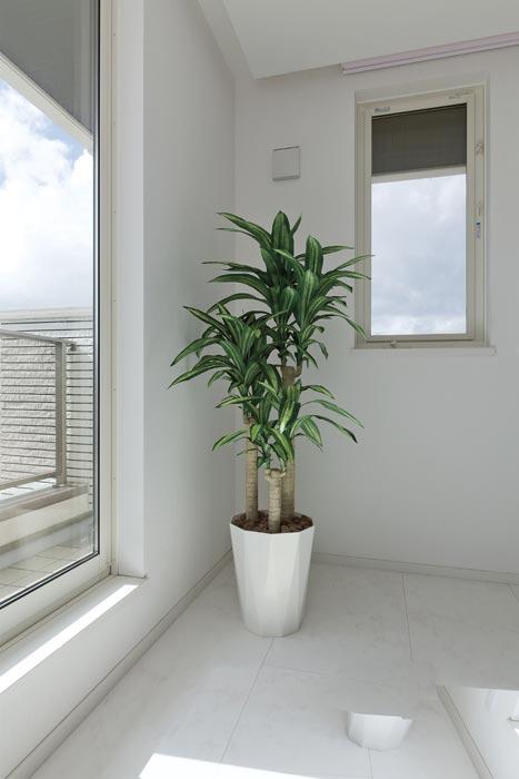 光の楽園 幸福の木1.6 400A300 2018年 アートグリーン 人工観葉植物 光触媒